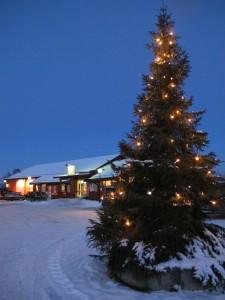 Julegrana på Feiringtunet