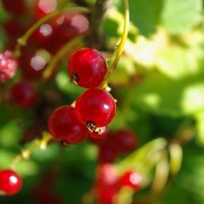 Har du bær og frukt til overs?