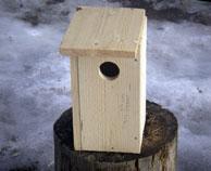 Fuglekassesnekring på saga