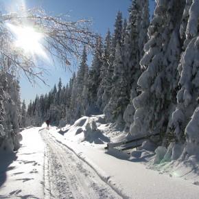 Søndagens skitur og løypemelding