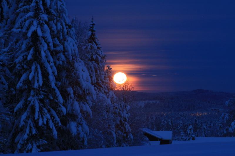 Måneskinns-aking