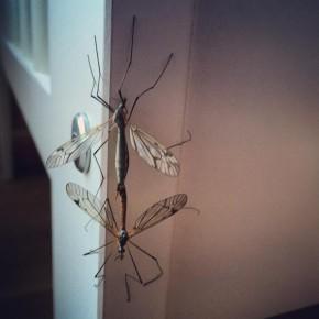 BioLab: Vi ser på insekter