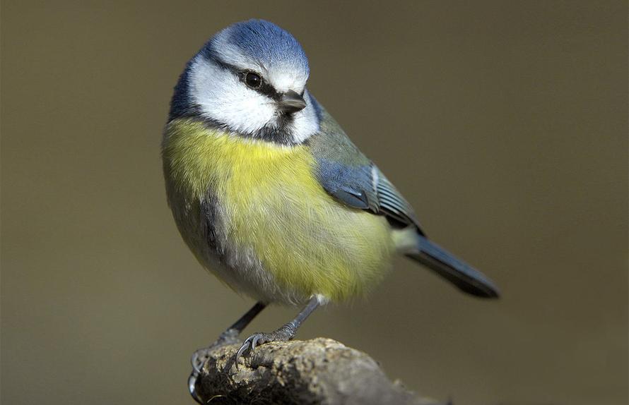 Fuglesangtur langs Mjøsa