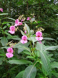 Uønsket plante sprer seg i Feiring